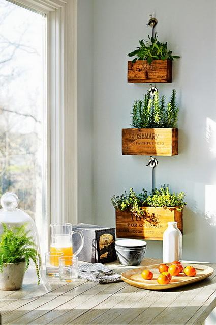 plantas-interiores-1